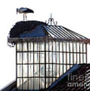 White Stork Art Print