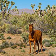 Wild Horse Of Joshua Tree Art Print