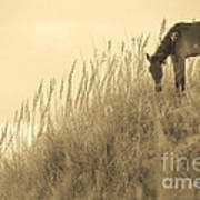 Wild Horse On The Outer Banks Art Print