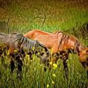 Wild Horses In California Series 2 Art Print