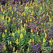 Wildflower Meadow Art Print