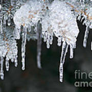 Winter Branches In Ice Art Print