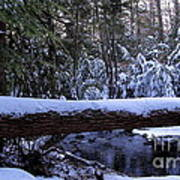Winter Forest Stream Art Print