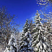 Winter Forest Under Snow Art Print