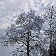 Winter Lace Art Print