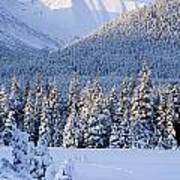 Winter Scenic Of Snowcovered Spruce Art Print