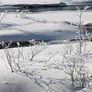 Winter Stream, Jasper National Park Art Print