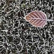 Winter With Frosted Leaf On Frozen Grass Art Print