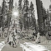 Winter Wonderland - Badger Pass In Yosemite National Park Art Print