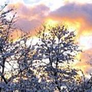 Wintry Sunset Art Print by Will Borden