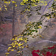 Wissahickon Autumn Art Print by Bill Cannon