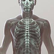 X-ray Skeleton Art Print