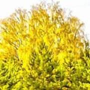 Yellow And Green Art Print