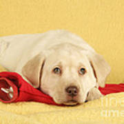 Yellow Labrador Puppy Art Print