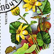 Yellow Lesser Celandine Ranunculus Ficaria Art Print