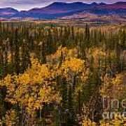Yukon Gold - Fall In Yukon Territory Canada Art Print