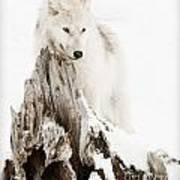 Arctic Wolf Pup Art Print
