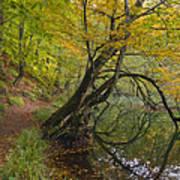 Fall Colours Art Print