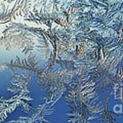 Frost On A Windowpane Print by Thomas R Fletcher