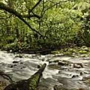 Jungle Stream Art Print