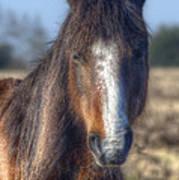 New Forest Pony Art Print