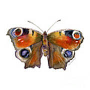 10 Peacock Butterfly Art Print