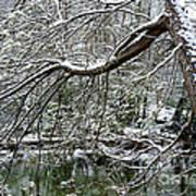 Winter Along Williams River Art Print
