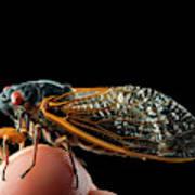 A Detailed View Of A Brood II Cicada Art Print