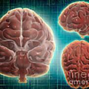 Conceptual Image Of Human Brain Art Print
