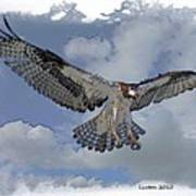 Osprey Flight Art Print