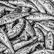Tile Of Fishes Art Print