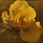 Vintage Yellow Rose Art Print