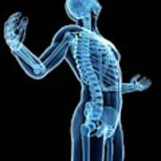 Human Skeletal System Art Print