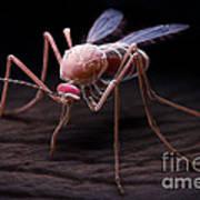 Anopheles Mosquito Art Print