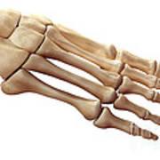 Foot Bones Art Print