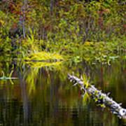 131005b-052 Forest Marsh 2 Art Print