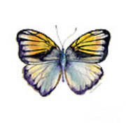 14 Pieridae Butterfly Art Print