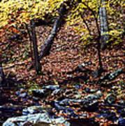 South Branch Quantico Creek Art Print