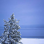 140303a-12 Winter Blues Art Print