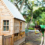 A Backyard Chicken Coop In Austin Art Print