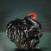 17. Black Frizzle Cochin Bantam Art Print