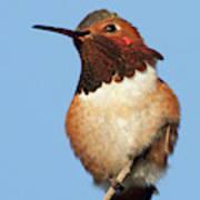 Birds Of The World Art Print