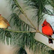 Northern Cardinal (cardinalis Cardinalis Art Print