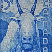 1956 Canada Mountain Goat Stamp Art Print