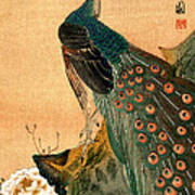 19th C. Japanese Peacock Art Print