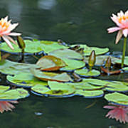 A Day At The Lily Pond Art Print
