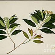 Album Of Drawings Of Plants Art Print