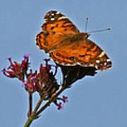 American Lady Butterfly Art Print
