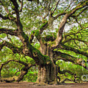 Angel Oak Tree Of Life Art Print