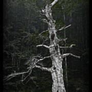 Anthropomorphic Tree Art Print